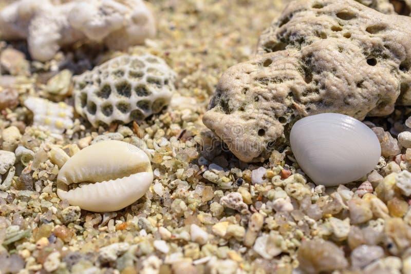 从水槽和珊瑚片断的宏观样式在海滩 图库摄影