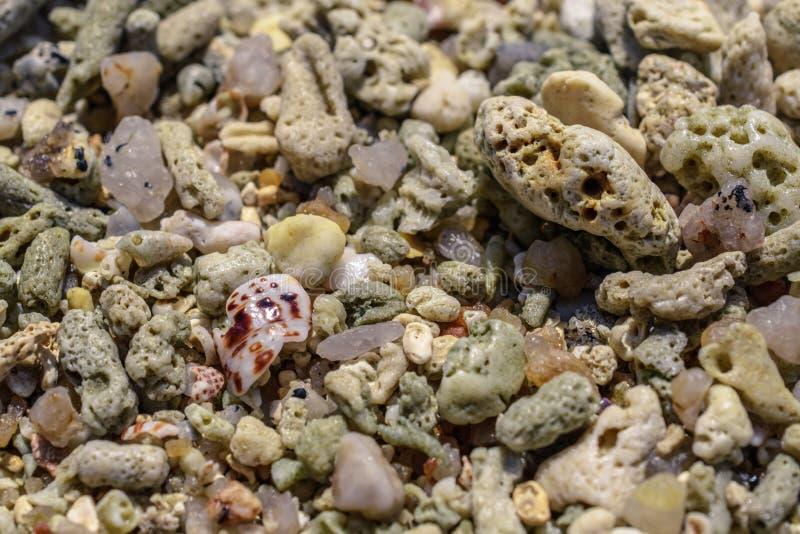 从水槽和珊瑚片断的宏观样式在海滩 免版税图库摄影
