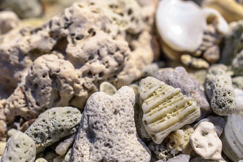 从水槽和珊瑚片断的宏观样式在海滩 免版税库存照片