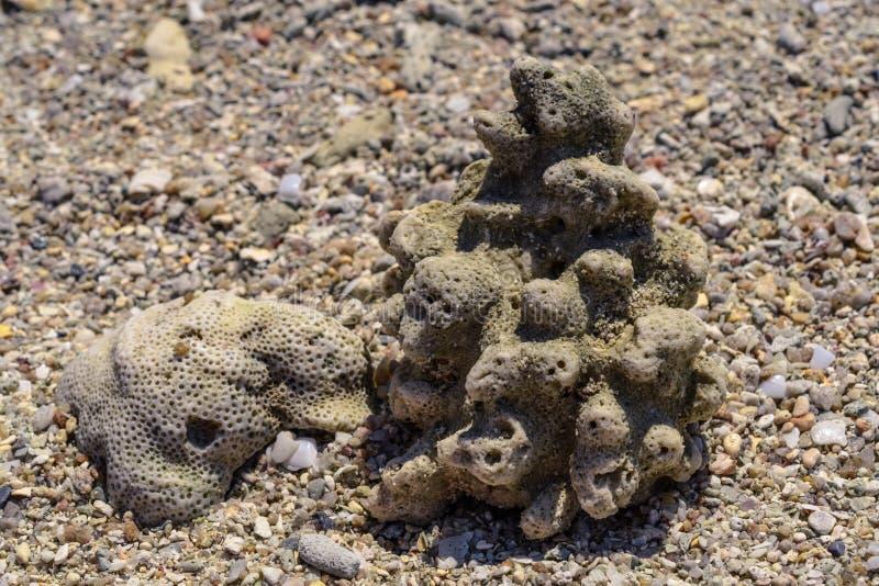 从水槽和珊瑚片断的宏观样式在海滩 库存照片