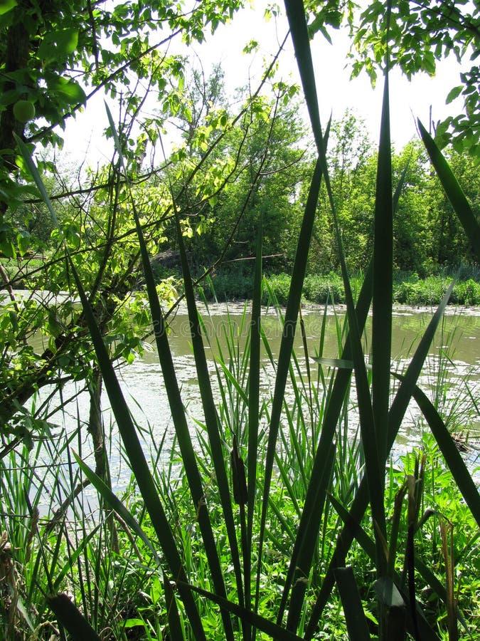 从沼泽的细节 库存照片