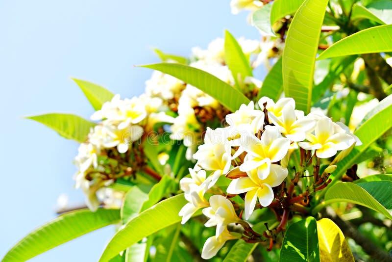 从热带contries的异乎寻常的花 您需要职业概念 美丽的罕见的植物 母亲` s天,国际妇女` 库存图片