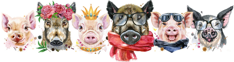 从猪的边界 猪和公猪水彩画象. 分娩, 国内.图片