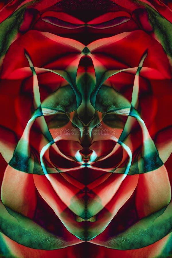 从玫瑰花瓣和反射色板显示的背景  库存图片
