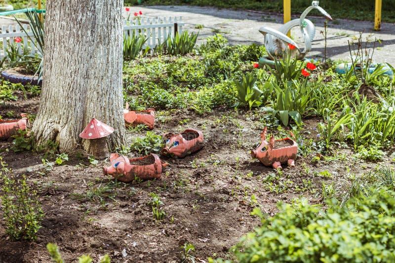 从瓶的小猪在草坪 免版税库存图片
