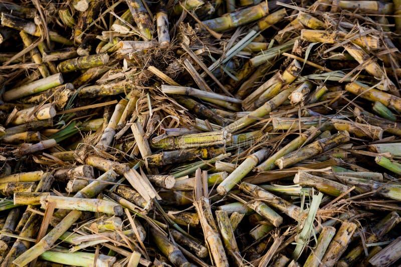 从甘蔗切削刀的藤茎片断糖工厂的 免版税库存图片