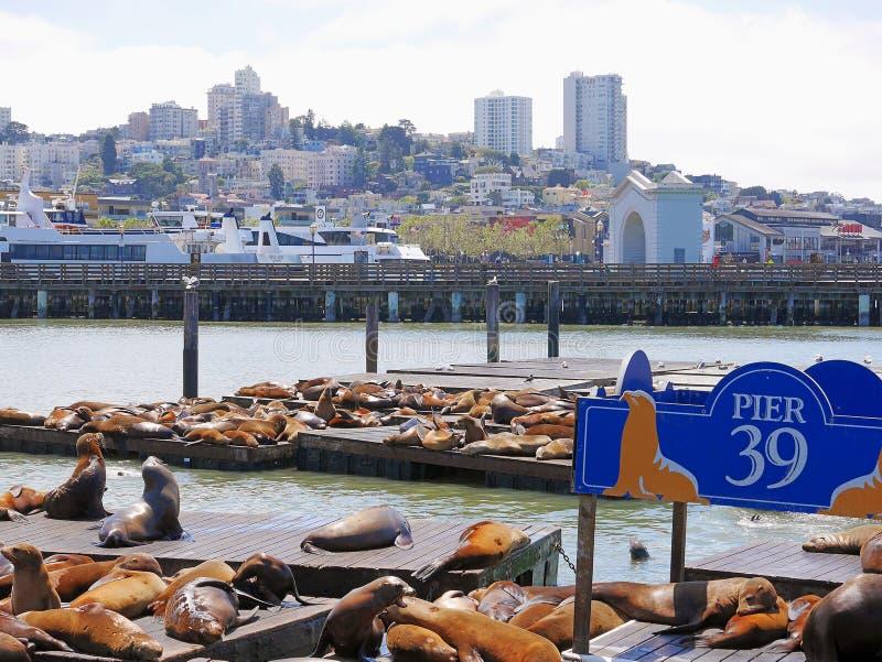 从码头39的风景在有基于木平台,俯视的城市` s多小山风景的海狮的旧金山 免版税库存照片