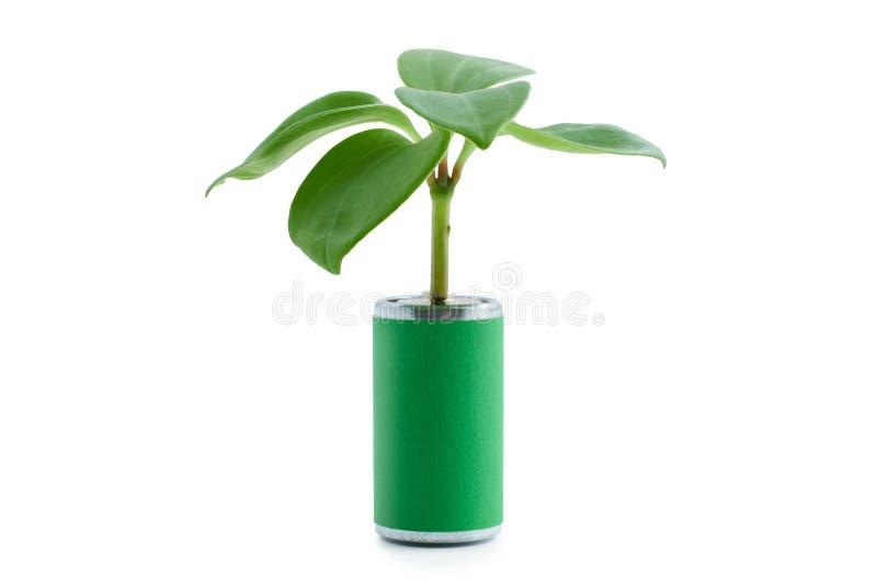 从碱性电池的植物新芽在白色背景 清洁能源和回收的概念 免版税库存照片
