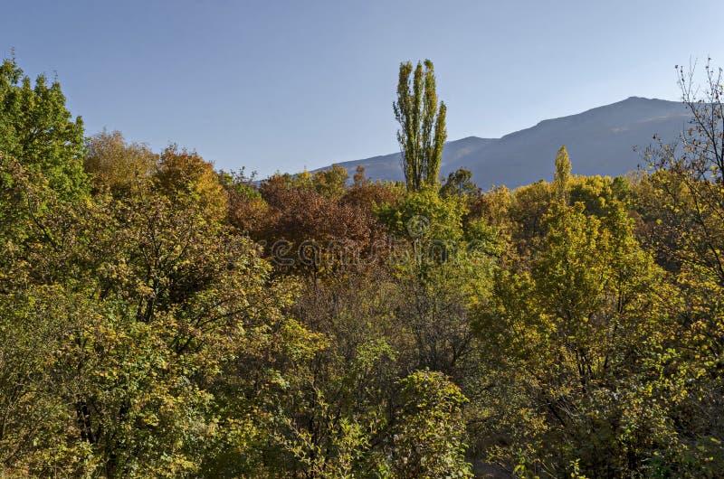 从秋季多色森林天空蔚蓝的,南方公园的自然本底零件 库存照片