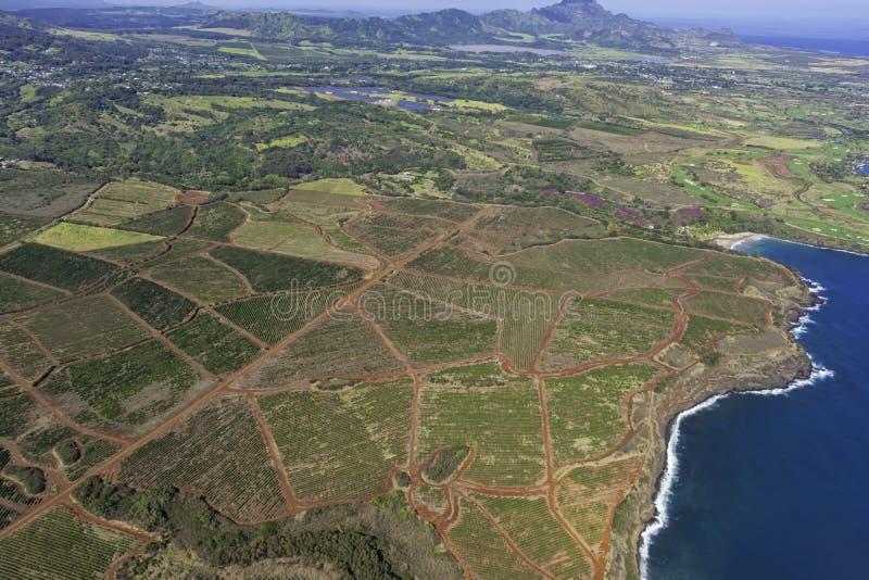 从空中看考艾岛南海岸,看到美国波普考艾岛附近的咖啡种植园 免版税库存照片