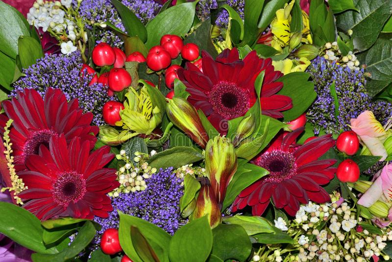 从红色大丁草的美丽的花束,德国锥脚形酒杯开花,亢奋 库存图片