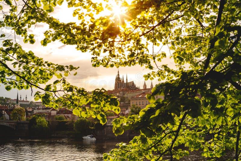 从绿树叶看布拉格城堡 库存图片