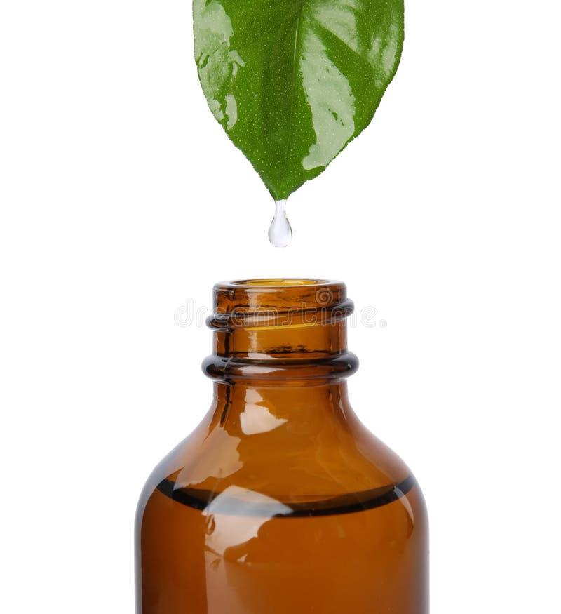 从绿色叶子的精油水滴到瓶里 图库摄影