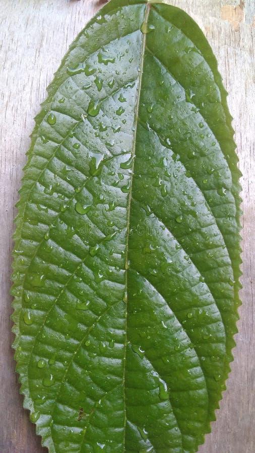 从绿色叶子的自然颜色 库存照片