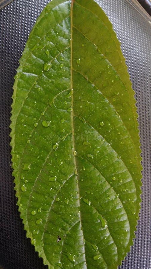 从绿色叶子的自然颜色 免版税库存图片