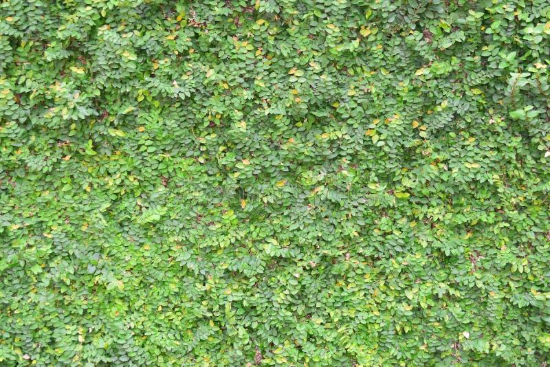 从绿色和黄色叶子的地毯 库存照片