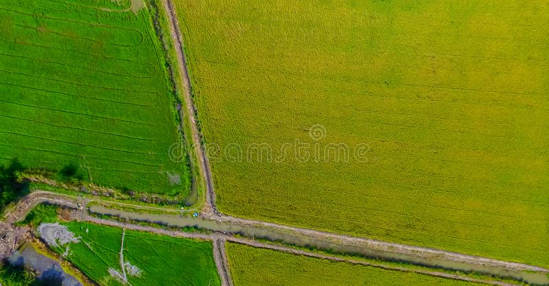 从美好的稻田的寄生虫的鸟瞰图射击用在种田有机收获的绿色年轻新芽用米 图库摄影