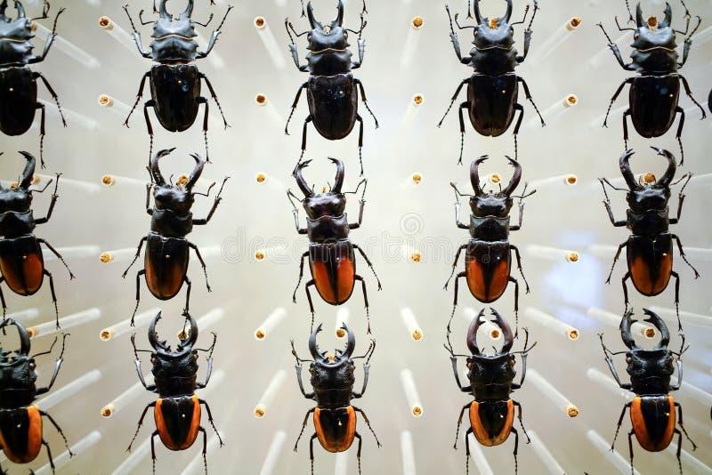 从自然上海博物馆的一个昆虫标本  免版税库存图片