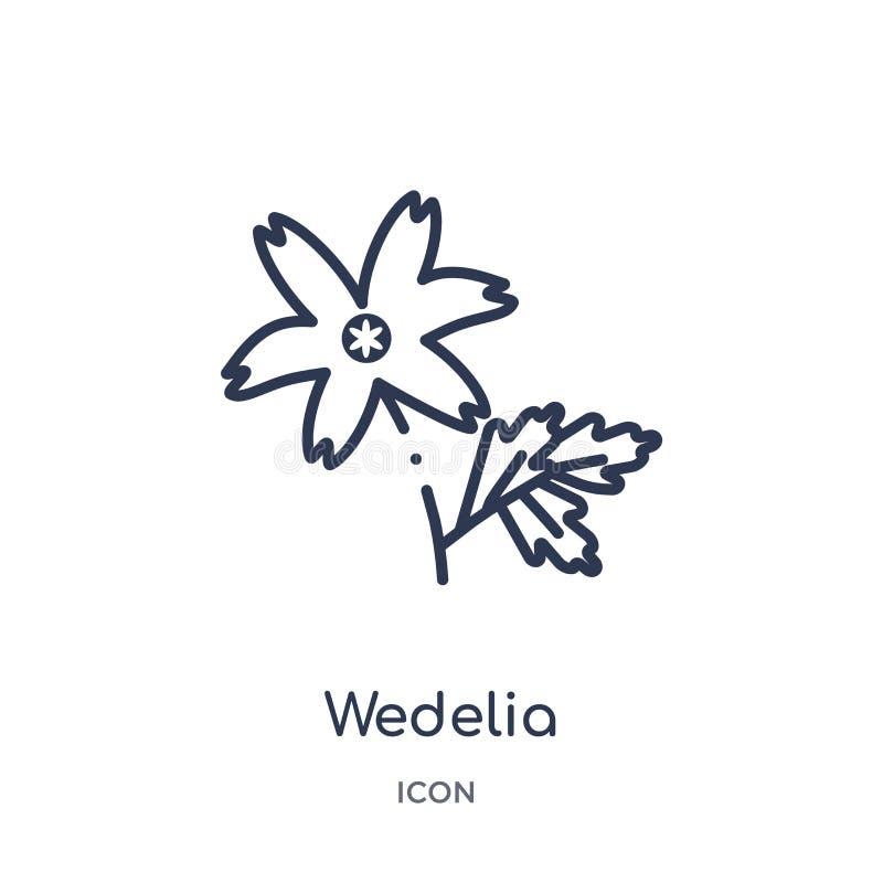 从自然概述汇集的Wedelia象 稀薄的线在白色背景隔绝的wedelia象 向量例证
