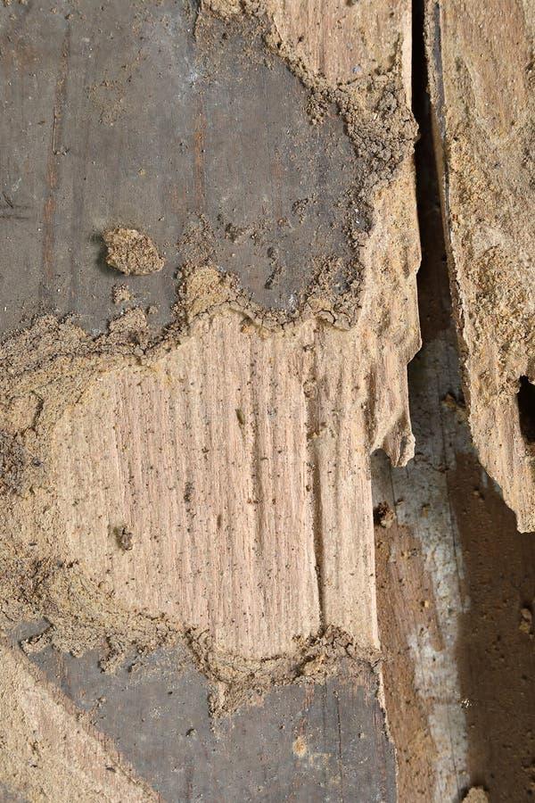 从臭虫的木谷仓板条凹陷损伤 库存图片