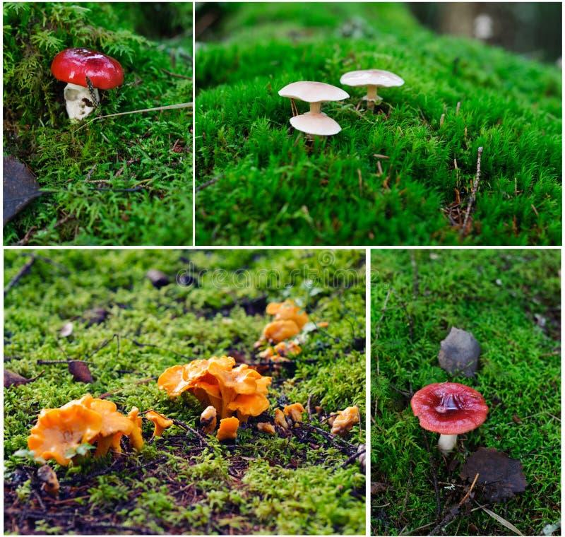 从芬兰的不同的蘑菇 图库摄影