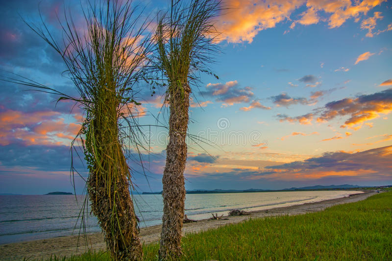 从草收集的美丽的棕榈滩 海滩海岛掌上型计算机天堂结构树