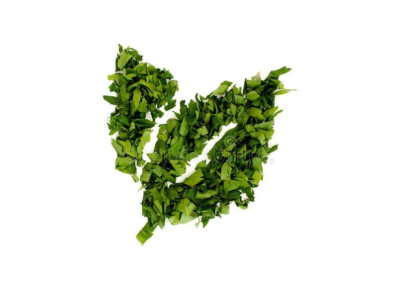 从荷兰芹叶子整洁地安排的两个绿色叶子剪影 素食者和肉盘的芬芳调味料 r 图库摄影