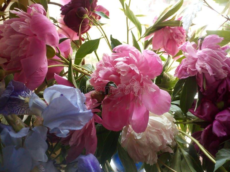 从蓝色虹膜和桃红色和伯根地牡丹的花束 免版税库存照片