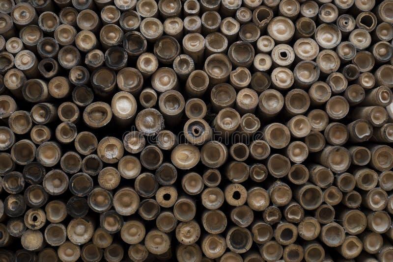 从被削减的末端看见的堆竹子 库存图片