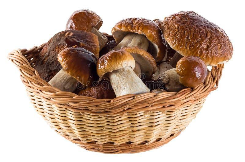 从被隔绝的自然大白色蘑菇的一幅美丽的静物画 库存图片