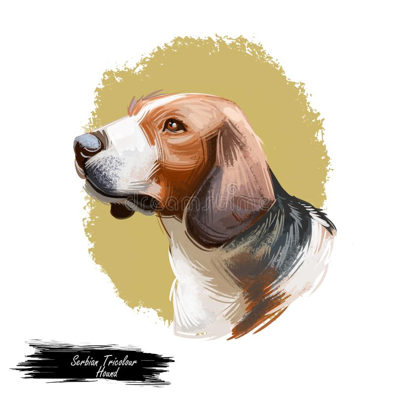 从西伯利亚狗品种数字艺术的西伯利亚三色猎犬 纯血统家畜水彩画象关闭 向量例证