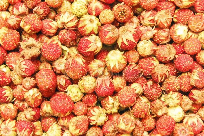 从野生莓果的背景 新鲜的甜成熟草莓 顶视图 免版税库存图片