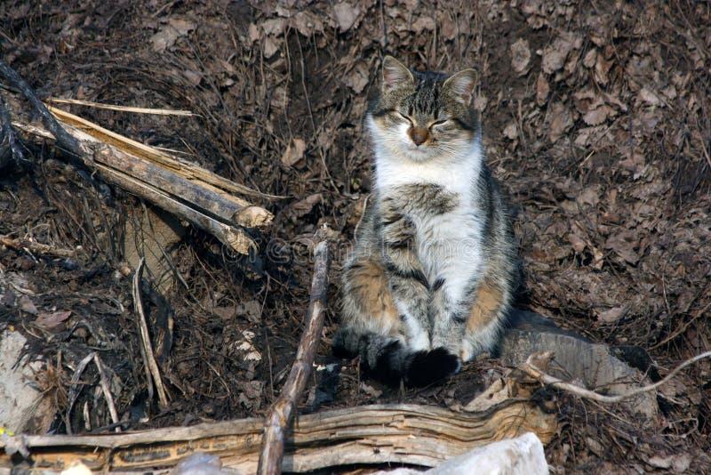 从阳光的猫半眯着的眼睛 免版税库存图片