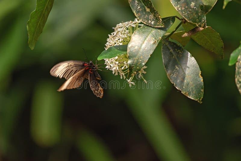 从雨林的昆虫 免版税库存照片