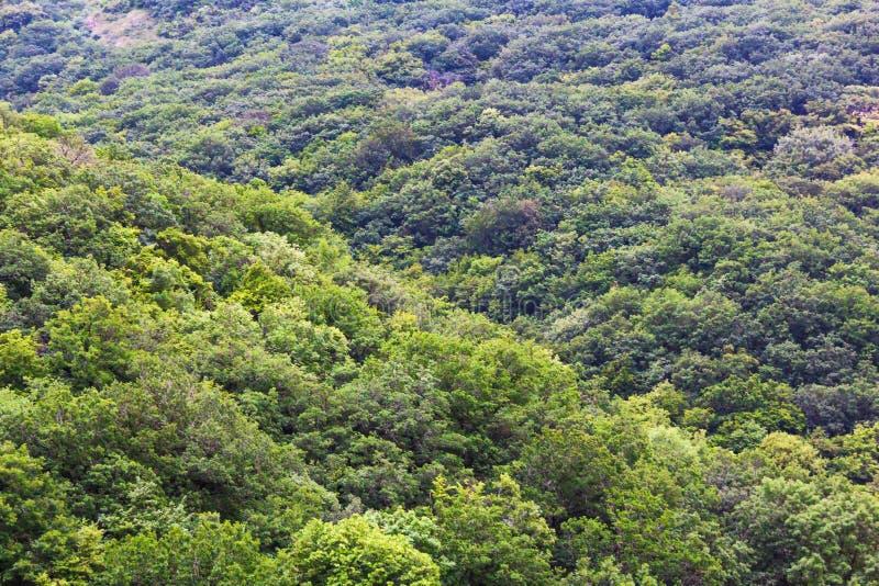 从顶视图的密集的绿色森林 免版税库存照片