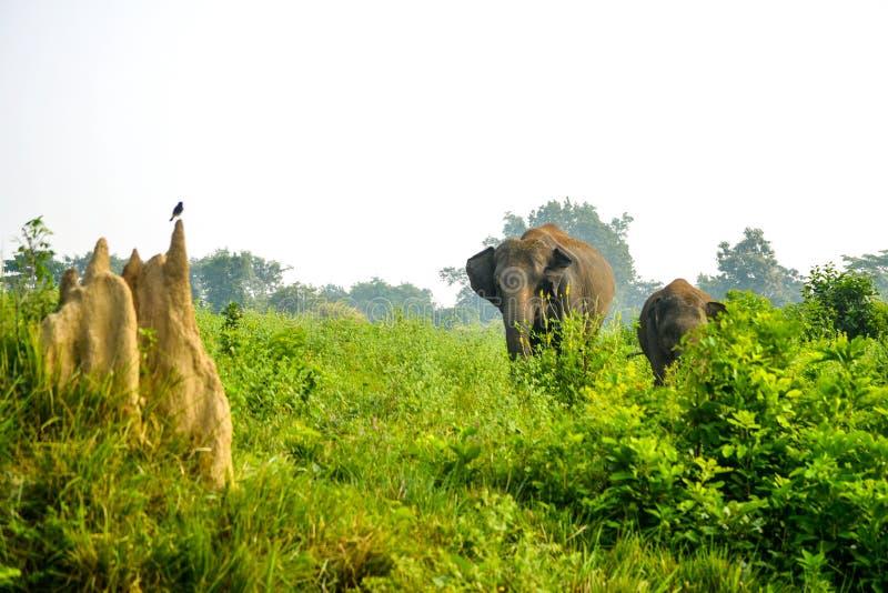 从鸟眼睛的大象 免版税库存照片