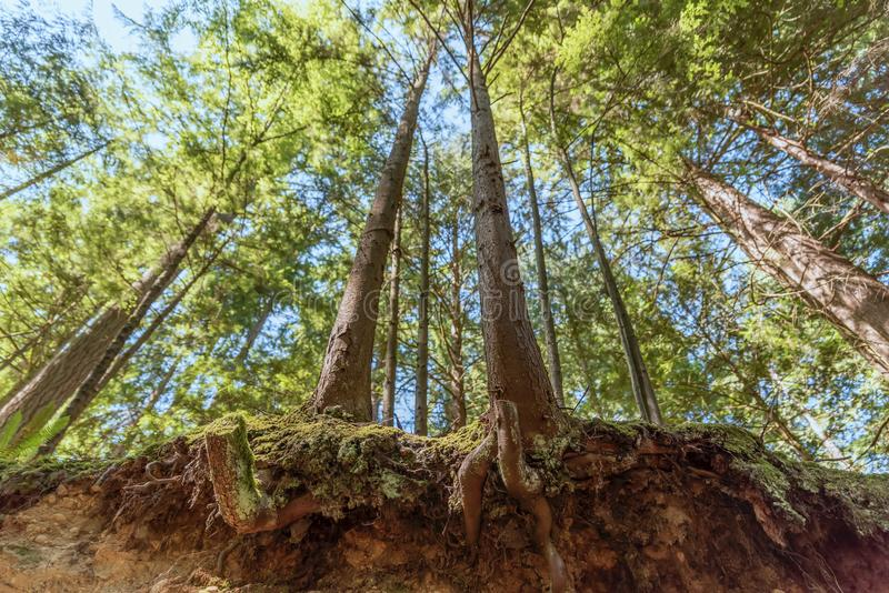 从黏附在地球外面的树下面根的看法,  库存照片