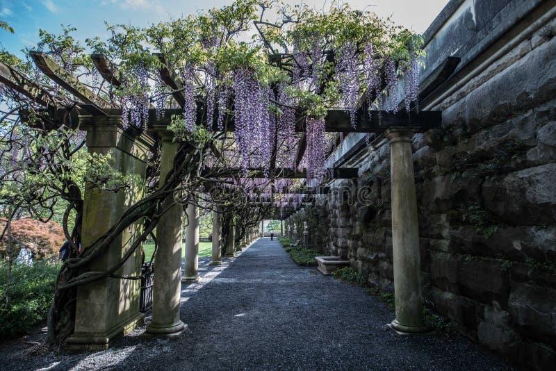从Biltmore庄园,紫藤荫径的看法 库存图片