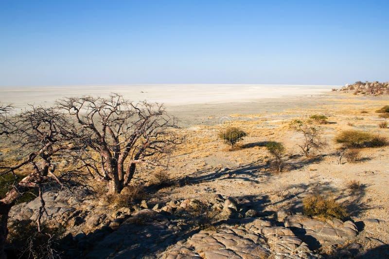 从Kubu海岛的视图在Makgadikgadi地区 库存照片
