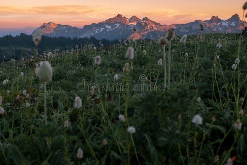 从Mt更加多雨的国立公园的日落横跨高山草甸花的领域对山脉的 库存照片