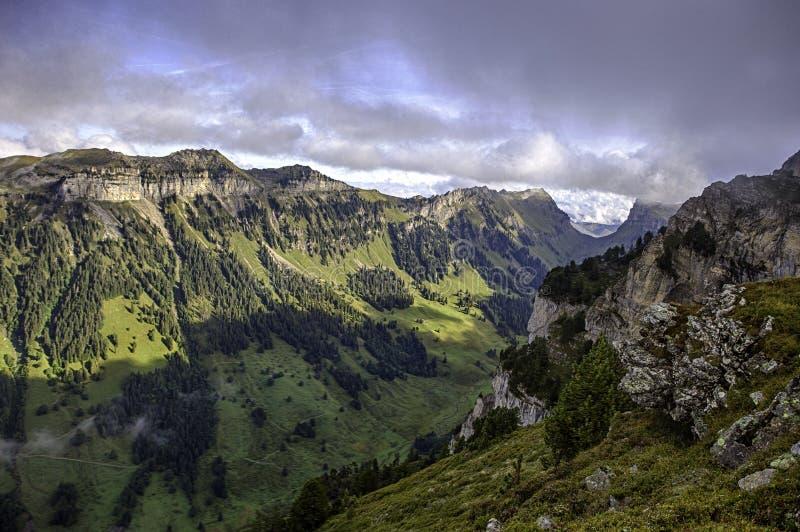 从Niederhorn在夏天,伯恩州,瑞士,墙纸的顶端Bernese阿尔卑斯 免版税库存照片