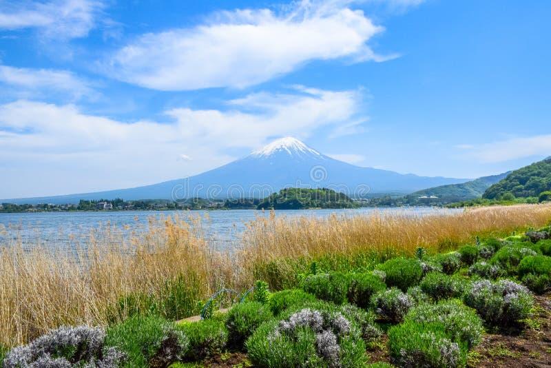 从Oishi公园的富士山视图湖的Kawaguchiko 免版税库存照片