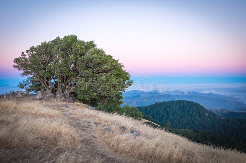 从Tamalpais山的旧金山 免版税库存照片