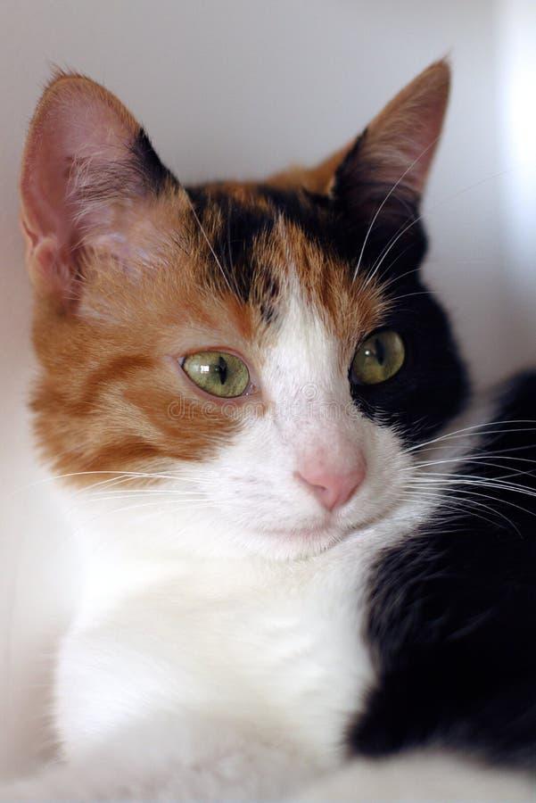 仔细的小猫年轻catÂ女性七个月老好奇 免版税图库摄影