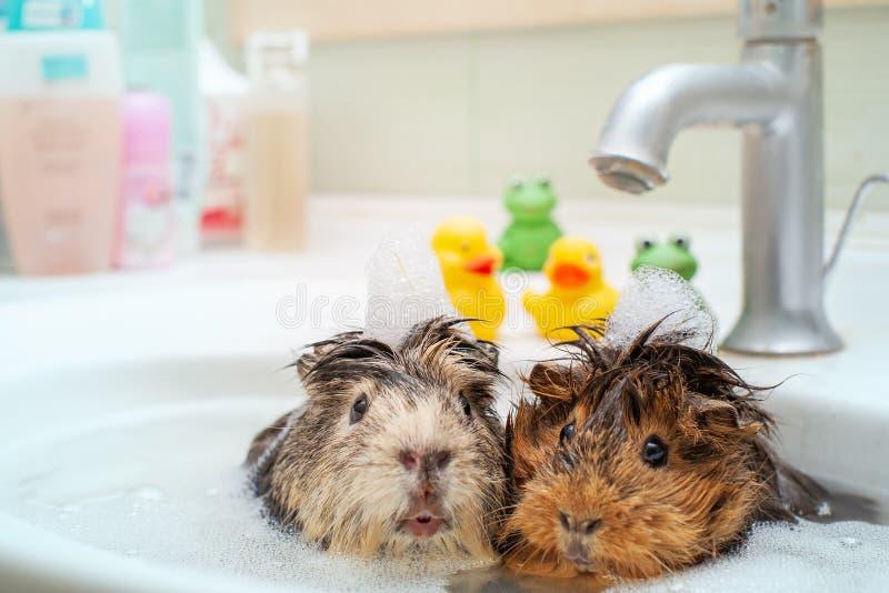 他们爱一起游泳 免版税库存图片