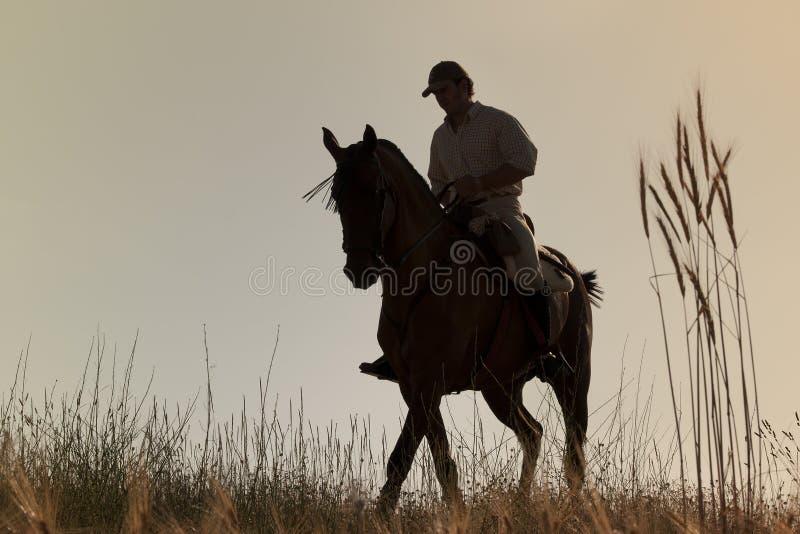 他的马车手日落 免版税库存图片