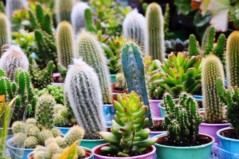 仙人掌仙人掌和多汁植物 库存照片