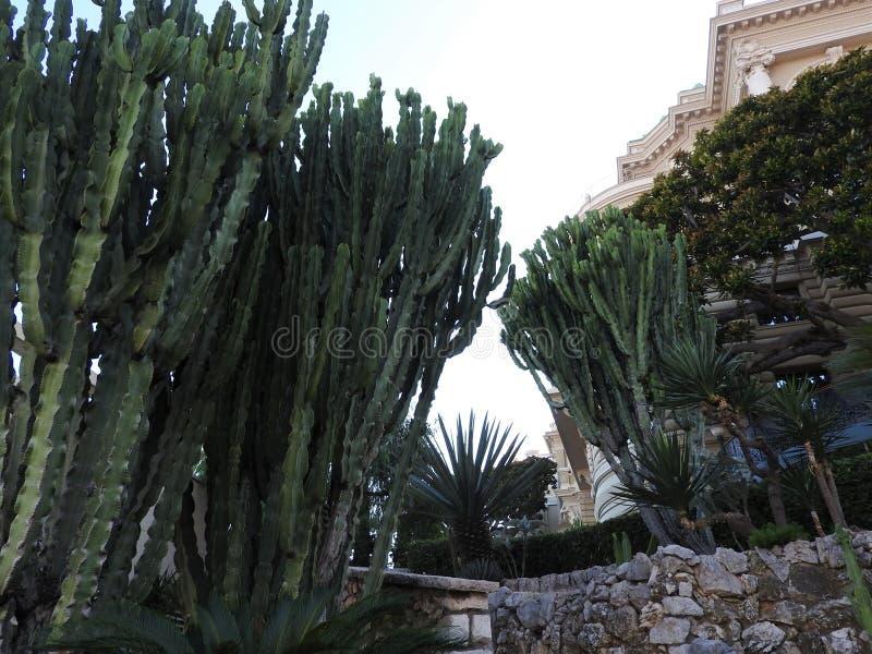 仙人掌作为围场的装饰,对著名赌博娱乐场的正门的在蒙特卡洛,摩纳哥 库存照片