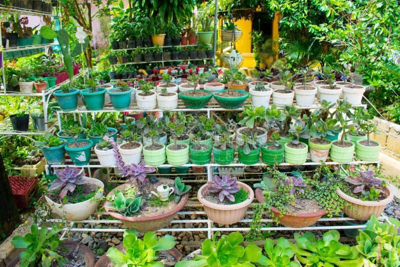 仙人掌和多汁植物品种庭院机架在罐种植了 库存图片