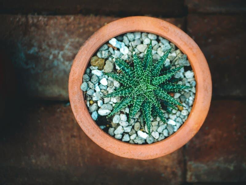 仙人掌和多汁植物品种罐的 顶视图 反对灰浆背景的壁角边界与拷贝空间 库存图片
